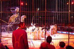 Múnich, Circus Krone.