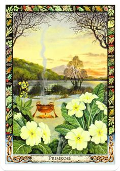 druid plant oracle cards |Primrose