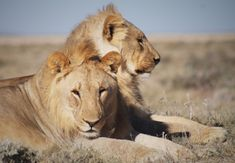 ETOSHA National Park, Namibia: THE BEST safari in Africa for young kids