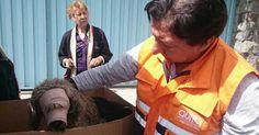 Encuentren al sujeto que le fracturó la mandíbula a un perro FIRMA Y COMPARTE ESTA PETICIÓN AHORA!