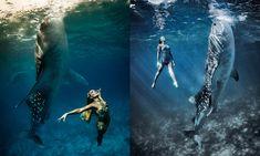 Shawn Heinrichs é um fotógrafo habituado a captar a realidade debaixo de água. Kristian Schmidt, também fotógrafo e também norte-americano, pra além da vida animal, se dedica à fotografia de moda. Os dois juntos criaram uma série que tem tanto de bela como de inesperada: modelos posando com tubarões baleia, os maiores peixes do mundo.
