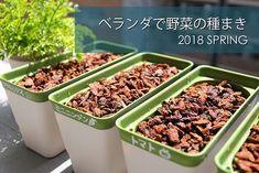 Mini Carrots, Garden Seeds, Growing Vegetables, Hydroponics, Vegetable Garden, Spring, Green Beans, Home And Garden, Plants