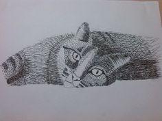 Gatito, contraste con texturas.