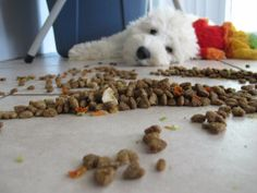 The Raw Food Diet for Dogs