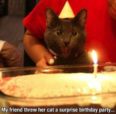 Surprised cat // funny pictures - funny photos - funny images - funny pics - funny quotes - #lol #humor #funnypictures