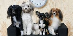 Colección LURVIG de IKEA para mascotas Estilo James Bond, Ikea, Mini, Dogs, Animals, Paint Wood Furniture, Make Up Organiser, Home Design, Pets