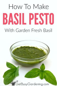 Learn how to make the best homemade basil pesto without pine nuts or cheese. This dairy free pesto r Pesto Recipe Without Cheese, Pesto Recipe No Nuts, Fresh Basil Pesto Recipe, Basil Pesto Without Pine Nuts Recipe, Recipes With Fresh Basil, Homemade Pesto Sauce, Pine Nut Recipes, Herb Recipes, Sauces
