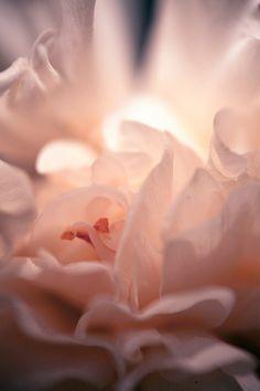 Softness of light