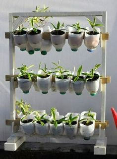 RRR 'n DIY, siembra decorativo pero plantas comestibles tambien.