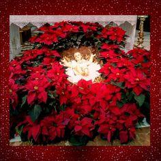 Buon Natale 🌟
