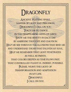 Dragonflies!!