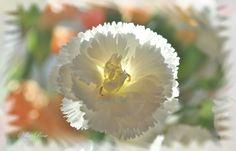 Фото, автор Алла-Rose на Яндекс.Фотках