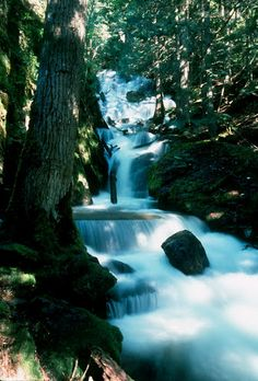 Falls Creek Falls, Troy, MT   © Marsha K. Russell