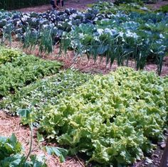 autumn vegetable garden | Fall Vegetable Garden