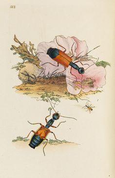 E. Donovan - Natural history of british insects. 8 Bde. 1794-1813.