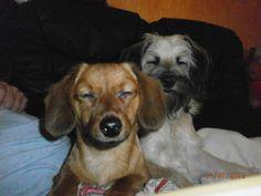 Hunde Foto: Angela und Motte und Krümel - Motte und Krümel in Love Hier Dein Bild hochladen: http://ichliebehunde.com/hund-des-tages  #hund #hunde #hundebild #hundebilder #dog #dogs #dogfun  #dogpic #dogpictures