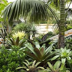 Chistopher Nicholas Garden Design. Beautiful foliage garden. Pinned to Garden Design - Planting Schemes by Darin Bradbury.