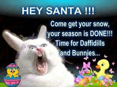 Christmas is over Santa. Come get your snow! Christmas Is Over, Christmas Tree, I Love Winter, Winter Time, Spring Time, Easter Bunny, Happy Easter, I Laughed, Funny Animals