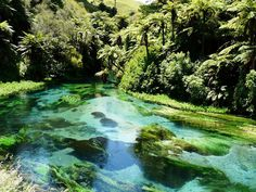 Far from the city or amongst the hustle and bustle, try one of these great Auckland walks. Karamatura Falls Pack a picnic, escape the city for . New Zealand Adventure, New Zealand Travel, Oh The Places You'll Go, Places To Travel, Places To Visit, New Zealand Holidays, Auckland New Zealand, Small Waterfall, Kiwiana