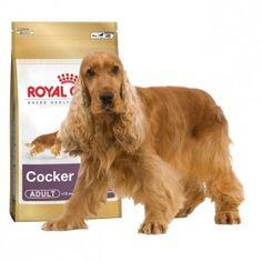 Alimento a medida para perros de la razaCockerde más de 12 meses. #perros #dogs #cocker #maskokotas #royalcanin