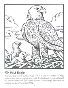 bald eagle coloring page - American Bald Eagle Coloring Page