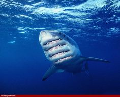 shark pics in high resolution | Shredder Shark Pics - High Resolution Photoshop Pictures - Freaking ...
