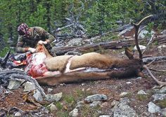 Handle with Care! How to care for game meat in the Field