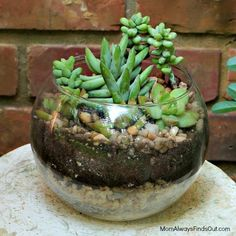 Modern Succulent Terrarium   This gardening project is so easy to make and will look fabulous!