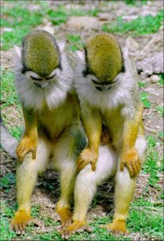 """""""You know what, let's start the day off right, bow your head and let's pray.""""  Identical twin monkeys."""