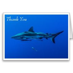 This greeting card features a Grey Reef Shark in the clear blue waters of the Coral Sea. The photo was taken during a shark feed on Osprey Reef about 200km off the coast of Australia. Easily customizable by simply replacing the text with your own.