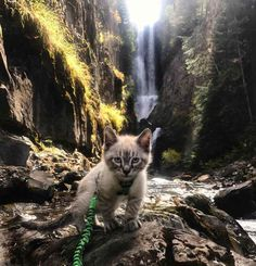 Meet a cat and a dog that were destined to have adventures together!