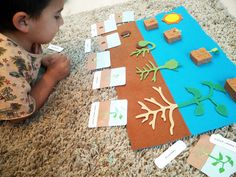 germination of seeds Montessori Botany: Seeds and the life cycle of a bean plant - Geodessee Sequencing Activities, Preschool Learning Activities, Preschool Science, Montessori, Planting For Kids, Bean Plant, First Fathers Day Gifts, Art Lessons Elementary, Botanical Drawings