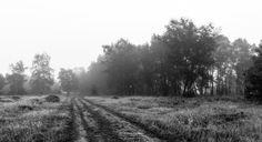 Photo Colorless Forest Path in  Bergerheide part of National Park De Maasduinen by William Mevissen. Landscape and Nature Photography at www.williammevissen.nl.