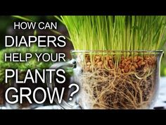 "If you are bad at remembering to water your plants, Grant Thompson has a great hack for you: just use diapers! In the above video, Thompson shows how you can use any pack of diapers to make ""super-absorbent hydro-soil"" for your plants."