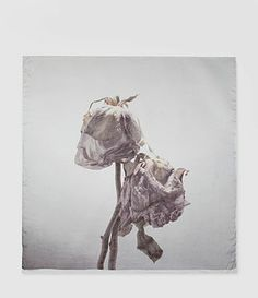 Womens Flora Mortis Limited Ed. 2 Scarf (Light Grey) | ALLSAINTS.com