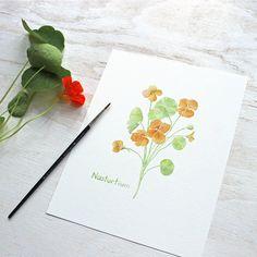 A beautiful 8 x 10 inch Nasturtium print from my edible flowers watercolor series. ~Kathleen