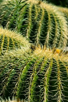 Catus by Wifred Llimona on 500px