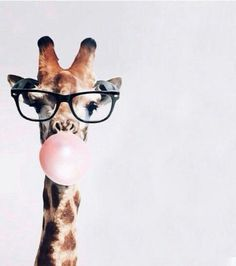 Jirafa hipster discovered by marti on We Heart It Imagen de animal, giraffe, and wallpaper Animals And Pets, Baby Animals, Funny Animals, Cute Animals, Tier Wallpaper, Animal Wallpaper, Screen Wallpaper, Cute Wallpapers, Wallpaper Backgrounds