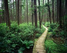 """The Japanese term Shinrin-yoku literally means """"forest bathin"""" and refers to spending time in the woods for its therapeutic effect. Science even confirms nature's healing influence on the body. When you spend time hiking or camping, you breathe in phytoncides, substances released by plants, which lower blood pressure and boost your immune system."""