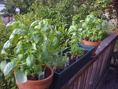 When Growing Herbs in Pots, What Are The Best Sized Pots to Use for Your Herbs