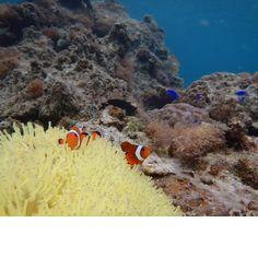 colorful fish#4