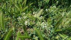 Beyaz Dağınık Çiçek +1