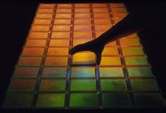 Sixty trays can contain the entire human genome as 23,040 different fragments of cloned DNA. Photo-James King-Holmes
