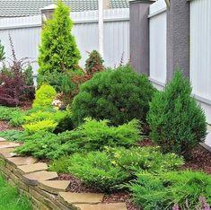 Shrubs For Landscaping, Low Maintenance Landscaping, Landscape Design, Garden Design, Townhouse Garden, Commercial Landscaping, Evergreen Garden, Smart Garden, Garden Whimsy