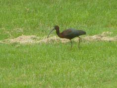 My Backyard Delaware City, Backyard, Bird, Animals, Patio, Animales, Animaux, Birds, Backyards