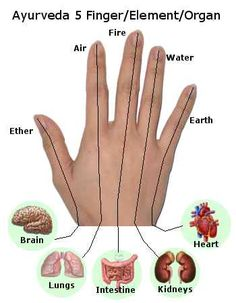 Ayurveda 5 finger, element & organ