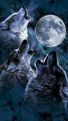 Omega wolf, wolf howling at moon, beautiful wolves, beautiful moon, three wolf Artwork Lobo, Wolf Artwork, Three Wolf Moon, Wolf Photos, Wolf Pictures, Wolf Love, Wolf Wallpaper, Animal Wallpaper, Omega Wolf