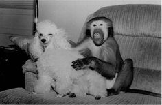 Смешные мартышки (16 фото)
