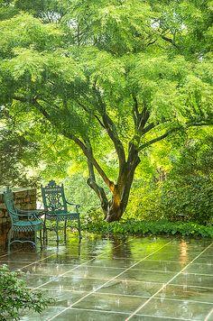 """2e Prix catégorie Jardin : Roger Foley,  Sun Shower.  Ruxton, Maryland, USA.  """"Je photographiais le jardin un magnifique matin de juin quand j'ai ressenti de légères frappes à la main. Au début, je pensais qu'il s'agissait d'un oiseau en colère, mais ensuite je me suis aperçu de la présence d'un petit nuage d'orage dans le ciel bleu vif. Je suis allé à la maison pour garder l'appareil photo au sec, puis je suis retourné à la porte pour voir les larges gouttes de pluie frapper la terrasse et…"""