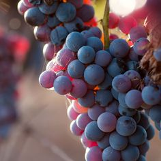 3. Grab a bunch of grapes http://www.rodalewellness.com/health/how-to-lower-your-blood-pressure-naturally/slide/3